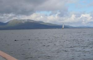 boatshark
